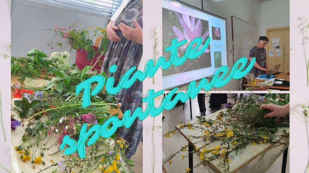 piante spontanne
