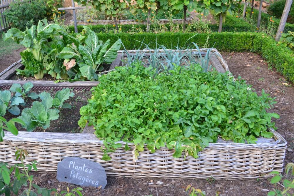 VegetableGreen