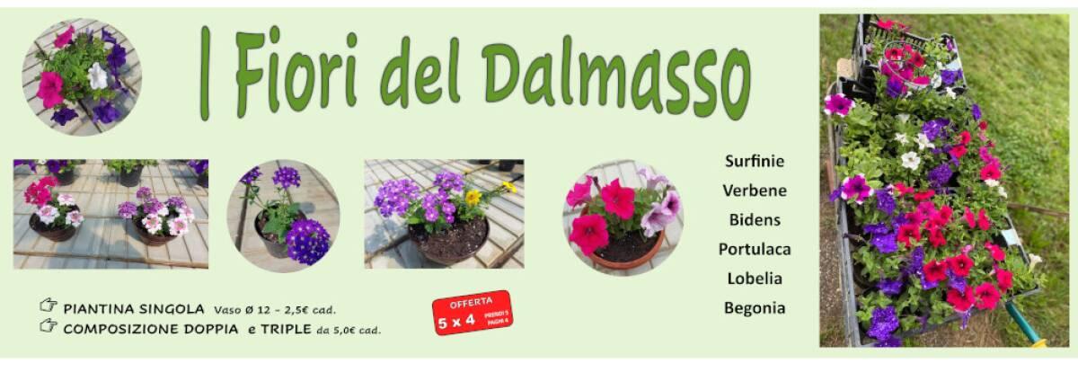 I fiori del Dalmasso
